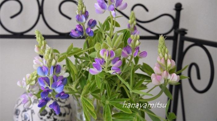 茎の曲がったルピナスの花は、口径の狭い花瓶に生けても横に広がるような姿になってくれるので、非常に絵になります。ちょっとした一工夫で個性的なルピナスの花あしらいができ上ります。