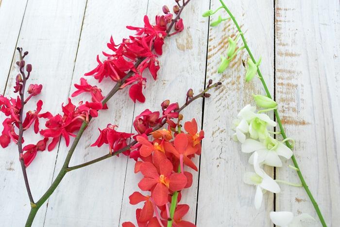 左から アランダ、モカラ、デンファレ  切り花、鉢ものともランは種類が豊富です。ランの花は、1本の茎にたくさんの花が段々とついていて、線の要素が強いことが特徴です。  そのランの中でもひとつひとつの花を見ると、少しずつ特徴があります。だいたいが1本に1本の茎の形状ですが、左のアランダのように、スプレー咲き(枝分かれして咲く)のランもあります。