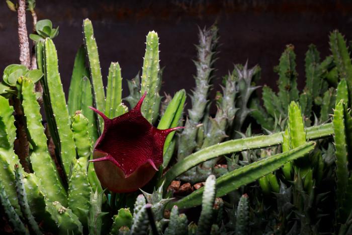 3-4cm程度の鐘型の花が咲きます。