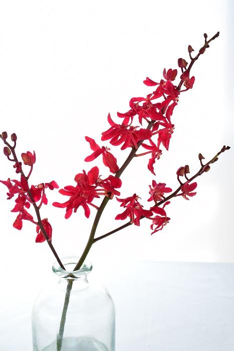 お水は花瓶に浅めに水を入れる浅水で生けましょう。  もしもランの花を一輪だけで生けるのなら、切り花のランには葉っぱがないので、口の細めの花瓶を選ぶと茎が定まりやすいでしょう。