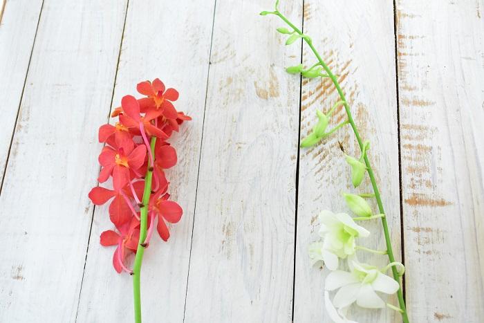 左より モカラ、デンファレ  1本の形状のランでも、全体としてみるとデンファレはすっとした雰囲気、モカラは花が丸くて集約しているのでかわいらしい雰囲気もあります。