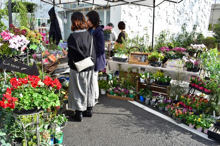 多肉植物や冬から春に向けての花苗が多種類販売されていました。珍しい植物もたくさんあって豊富な品揃えです。