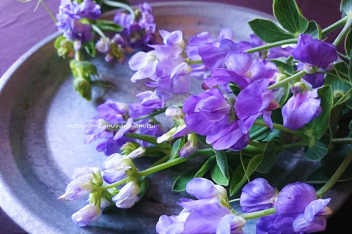 宿根スイートピーとは、一般的なスイートピーと同じマメ科レンリソウ属の植物です。一般的なスイートピー(Lathyrus odoratus)は一年草ですが、宿根スイートピーは文字通り宿根草です。  宿根スイートピーの中でもこのブルーフレグランスという品種は、うっすらと芳香があり、淡い紫ともブルーとも取れるような色が魅力的な花です。  アネモネやラナンキュラスの花束やアレンジメントに入れると、春の野原のような雰囲気が出来上がります。