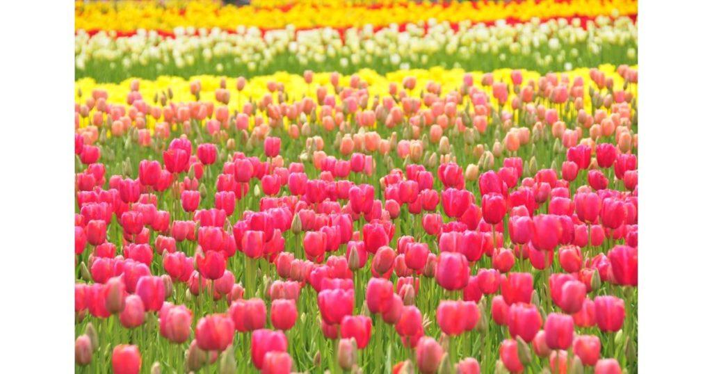 日比谷花壇フラワーデザイナーと作る「春の球根植物フラワーレッスン」1