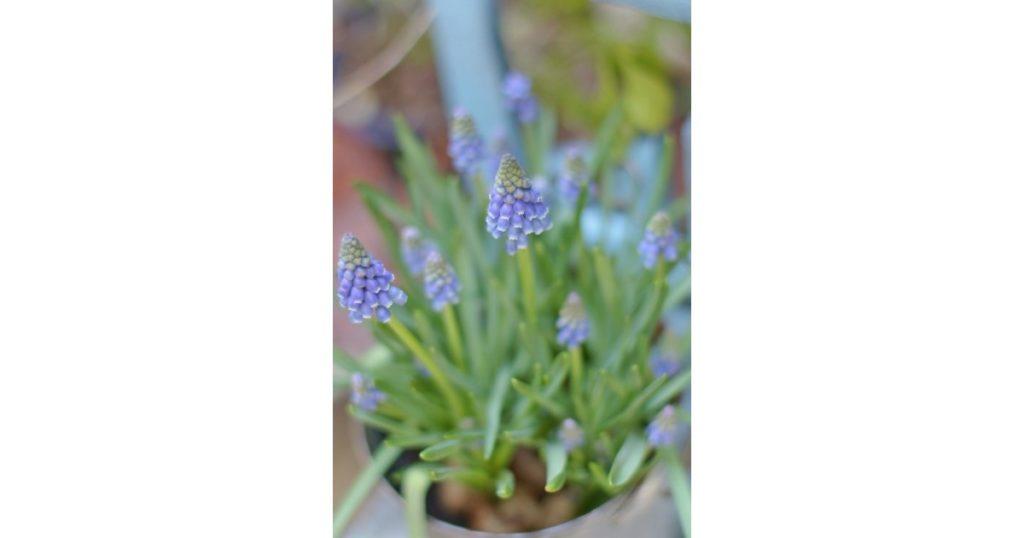 日比谷花壇フラワーデザイナーと作る「春の球根植物フラワーレッスン」2