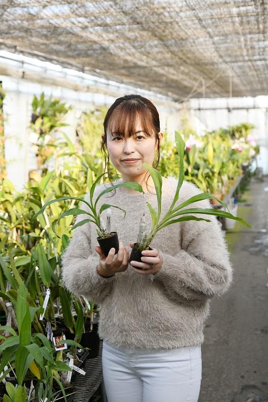 三林寛子さん  「タケノコ系のランは日本だけでなく、海外でも人気。クロウェシアやカタセタムなど、ブラジル原産のものを仕入れていますが、イベントなどに出す前に、すぐに買い手が決まってしまうほど。」(ベラビスタオーキッドジャパン・三林寛子さん。以下同)  そう語るのは、タケノコ系の故郷ブラジルのランを輸入している三林寛子さん。そんな三林さんに、オススメのタケノコ系のランお教えていただきました。