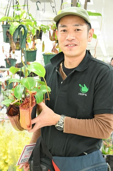 ネペンテス(ウツボカズラ)やセファロタスなどの食虫植物専門店。店主の鈴木廣司さんがオススメしてくれたのは、ネペンテスの交配種。