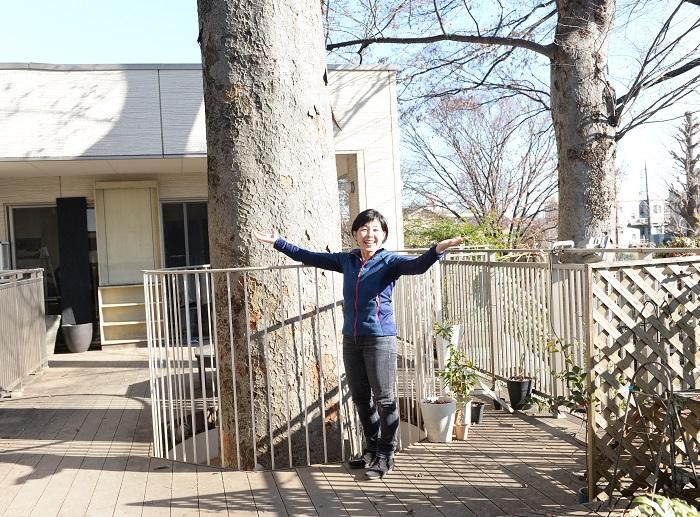 「見てください。このケヤキの大樹がとても素敵でしょ。ここに来るとケヤキの大樹に見守られているようでとても穏やかな気持ちになるんです。」  渋谷園芸練馬本店の2階テラスは、ケヤキの大樹に合わせて設計がされていて自然のやさしさにつつまれています。
