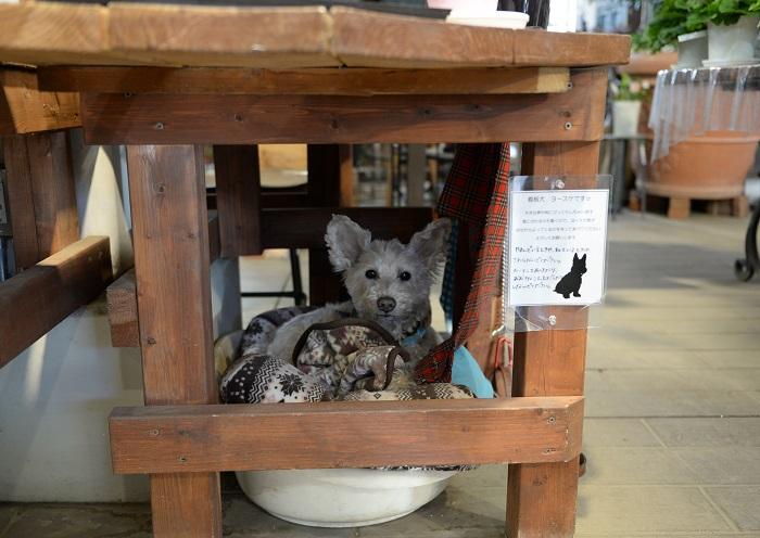 お店の看板犬「ヨースケちゃん」もいましたよ。