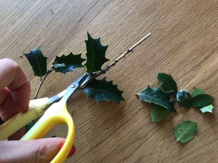 3.柊の枝の先に鰯の頭を突き刺す為、枝の先端にある葉を切り落として整えます。
