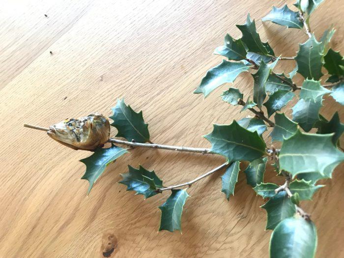 4.柊の枝に焼いた鰯の頭を口か目から枝が突き出るように突き刺します。