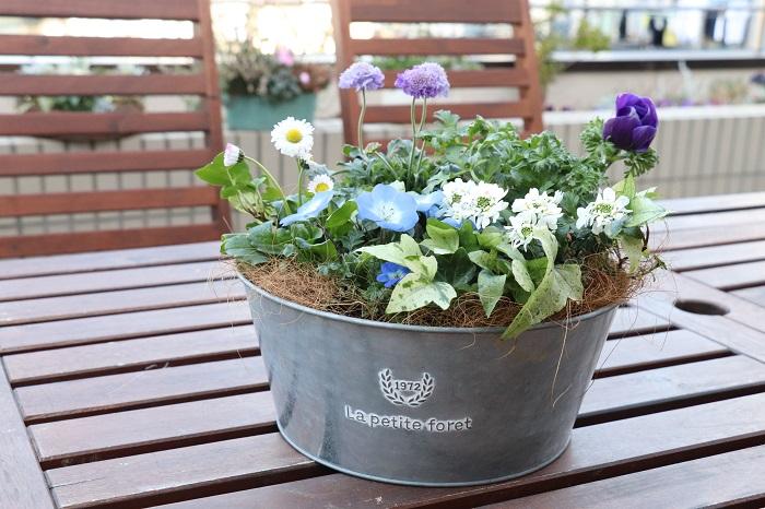 寄せ植えを上手に管理して、冬から春までながく楽しみましょう。  置く場所 屋外の日なたに置きます。  肥料 肥料入り培養土を使うので、1カ月後から水やりをかねて液肥や固形肥料を与えます。  花がら取り こまめに花がらを取って、次の花をどんどん咲かせましょう。