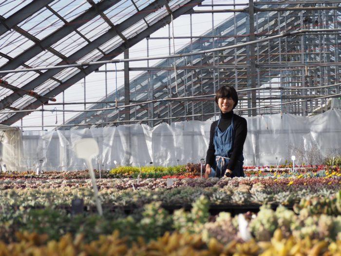 岐阜、長野の農場で多肉植物、タンクブロメリア、バラなどを生産販売しています。