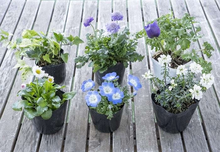 ・ポット苗(6ポットくらい)  花苗ブルー系3ポット、花苗ホワイト系2ポット、株分けできるリーフ1ポットがおすすめです。  植える配置をイメージして苗を選びましょう。