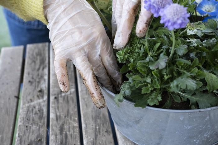 外側から一周、土を入れては指でつっつきながらしっかりと入れていきます。