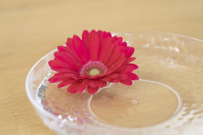 ガーベラはお花屋さんで、一年中購入する事ができる人気のお花です。咲く季節は春と秋。  3月~5月、9月~11月頃となります。気候も良いこの季節に咲くガーベラは寒さと暑さが苦手。切り花を生ける際、気温の低い場所に置いた方がお花が長持ちするかもしれないとつい思いますがガーベラは気温が10度以下になると萎れてしまう場合があります。  茎がグリーンのまま傾いたように花びらも萎れた様子の場合は気温が低い証拠。ほんの少し気温の高い場所に移動をして一度水の中で茎を切り戻して生け直すと解消される事があります。  また真夏にガーベラを購入するとすぐに茎が腐ってしまう事があります。この場合は気温の高さと水の温度が上がっているので氷を2つ位入れてあげると解消します。その際は冷たすぎないようにお気をつけて下さいね。