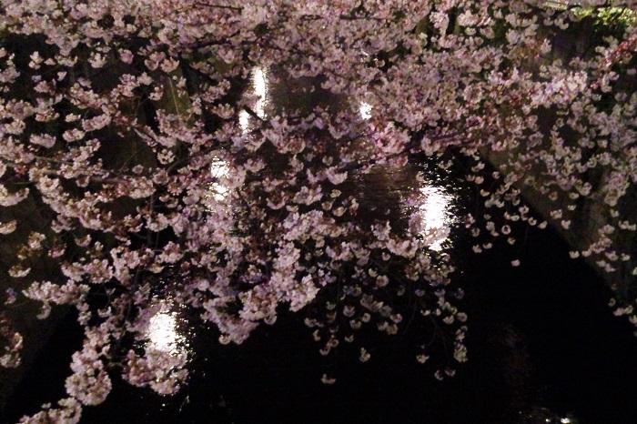 桜の花の美しさは文豪も魅了してきました。桜が登場する小説は多々ありますが、その中でも取り分け桜らしく妖艶な美しさの作品をご紹介します。  桜の樹の下には 梶井基次郎 「…屍体が埋まっている!」は有名なフレーズです。桜の季節になると繰り返しあちこちで耳にする台詞かもしれません。短編ですが、桜の妖艶な魅力が伝わってきます。  桜の森の満開の下 坂口安吾 こちらも「桜と言えば、坂口安吾」というくらい有名な小説です。満開の桜の森の中で見たのは夢か現か。桜にも小説にも飲み込まれていくような美しい小説です。