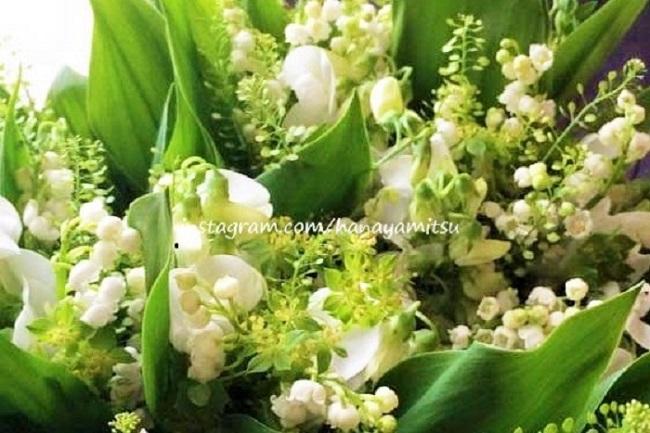 ■学名:Convallaria majalis  ■科名:スズラン亜科  ■分類:多年草  小さな白い花を俯くように咲かせるスズラン。可憐な花姿とすっきりとした芳香が人気です。野花のような控えめな雰囲気も相まって、ブライダルブーケにも使用されます。  露地で花を咲かせるのは、4月の下旬から5月上旬ですが、切花では2月くらいから出回ります。  甘ったるさの無いすっきりとした香りが人気です。