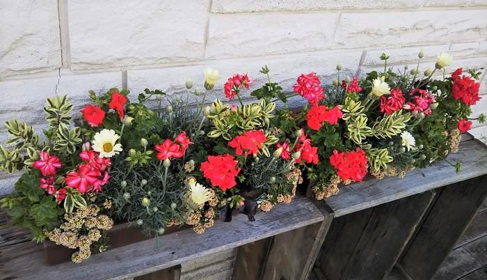 Photo by:樺澤智江  さあみんな、園芸店へ行こう!お気に入りのひと鉢を見つけに。  このボタニカルピープルやBotapiiを読んで、園芸店に行きたくなる人が一人でも増えますように。