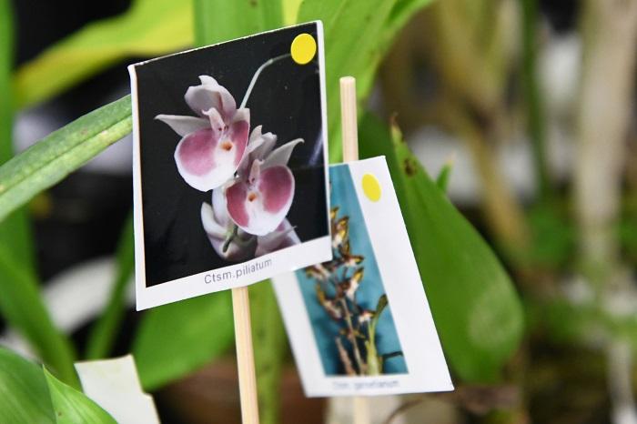 花芽つきの株もまだあるので、ぜひ育ててみてください。花芽がないものも、花の写真付きで並べてあるので、好みの花を見つけてくださいね。」