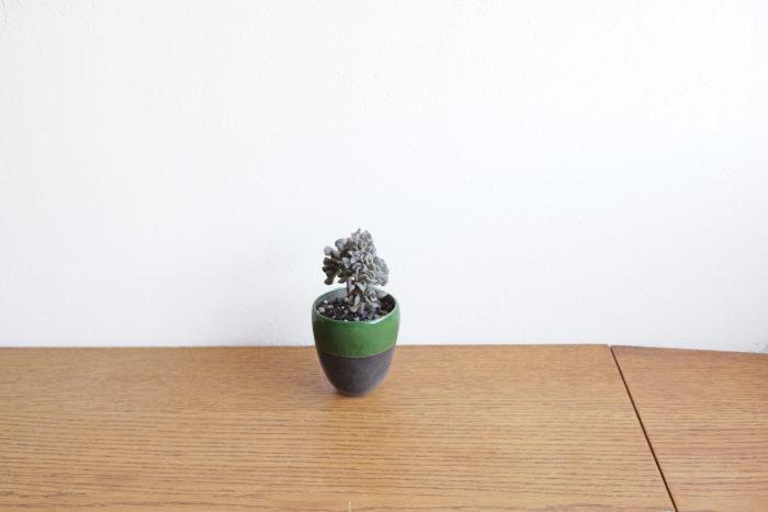 生長点に異常が生じ、帯状に生長するようになったキュービックフロスト。またとない独特なシルエットが魅力的な多肉植物。  ・乾燥「強い」  ・水やり「少ない」