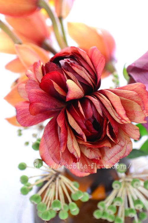 こちらは一輪に二つの花がついているラナンキュラス。  色合いがとても素敵でした。和風のコーディネートにも合いそうな雰囲気です。