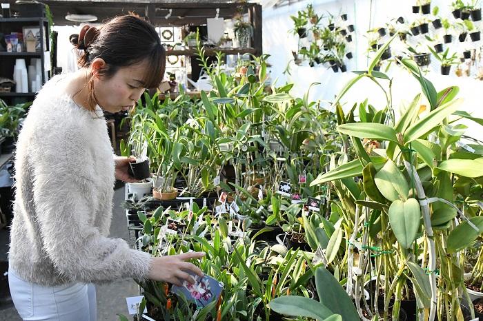 子どもが学校に行っている平日に時間が空いたときは、友人とランチに行ったりイベントをのぞきに行ったりすることが多いですが、自然に植物や花があるお店に足が向かってしまいますね。植物を上手く取り入れているお店や、今っぽい雰囲気で植物を押し出しているお店の情報を見ると、つい気になります。  あとこれは半分仕事みたいなものなのかもしれませんが、自分が出店しないラン展も、なるべく見に行くようにしています。
