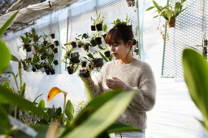 実生でふやしたブラジルのランをメインに、らん展や植物イベントなどで、月1回ほどのペースで販売しています。
