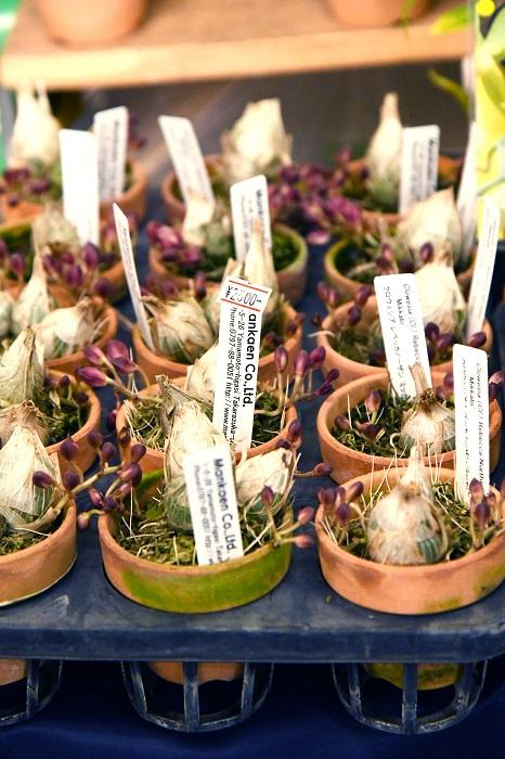 さまざまな種類のランを幅広く扱う兵庫県宝塚の老舗が今年も出店。ワイルドな株姿が魅力で、葉が無い時期でも観葉植物として楽しめるバンダも充実しています。育てやすくて葉がきれいなジュエルオーキッドやカタセタム、クロウェシア、フレッドクラーケアラといった人気のアイテムもバッチリ押さえた品ぞろえなのはさすがです。