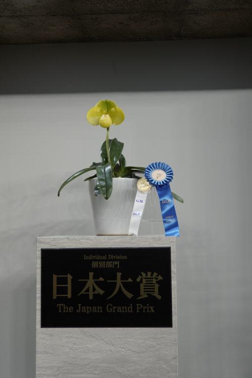 2019年の日本大賞に選ばれたには、港区在住の会社役員、桜井一(さくらいはじめ)さん(71)が日本大賞に選ばれました。受賞した蘭は、パフィオペディラム属エメラルド・ゲートという品種で鮮やかな黄色が印象的な大きく存在感がある花を一輪咲かせていました。