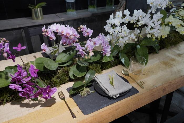 小さめの花を咲かせる、胡蝶蘭のミディをテーブルの真ん中にセンス良くあしらい、テーブルセッティング。こんな風に、植物と暮らしが近くにある環境って素敵ですね。暮らしのなかのスパイスに取り入れたいアイデアがいっぱいです。