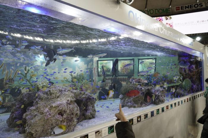 美ら海水族館からも南の海の生き物たちが気持ちよさそうに泳いでいました。蘭に囲まれた青い海は南の島のようなのんびりしたオアシスのような癒しの空間。