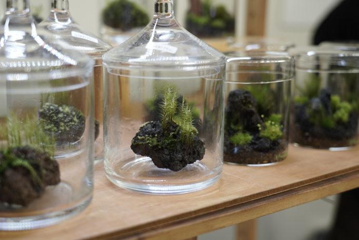小さくて美しい苔の世界。苔テラリウムなど、独特の世界観が魅力の販売ブースも発見!