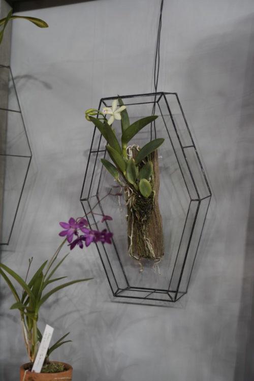 展示されているのを見つけた瞬間にテンションが思わず上がってしまいましたが、これは御社が発行しているBotapiiでも表紙を飾った、西富なつきさんの植物を飾る素敵な額縁です。素敵ですね~。