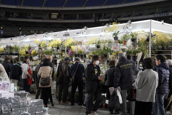 また販売エリアでは、118店舗の販売ブースが一挙に立ち並びます。世界各国から集まった生産者さんが蘭や食虫植物、塊根植物、切り花などを販売し、珍し植物にも出会える植物好きにはたまらないエリアとなっています。素敵な植物との出会いがありそうです。宝物探しのようにお気に入りが見つかります様に。