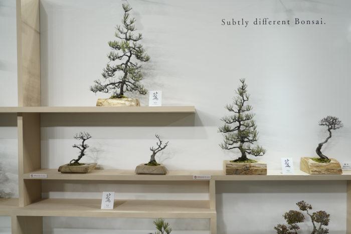 こちらは、すばらしい枝ぶりの盆栽の展示。植木鉢も上品でどんなスペースにも似合う洗練された様子にしばし見とれて鑑賞してしまいました。