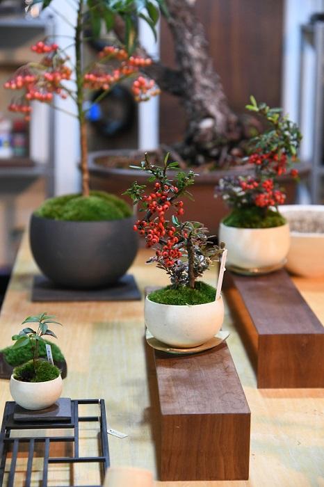 小さくて品よく作られた盆栽だけでなく、鉢や什器まで、小林さんの厳しい審美眼にかなったものばかり。