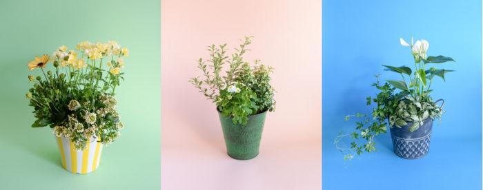 """少ないスペースでも管理できる""""3ポット""""で作るミニマムな寄せ植え特集。  ムードや色、鉢のアレンジで自分好みに寄せ植えを作ることが出来ます。"""