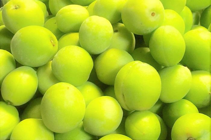 梅干しや梅酒、梅の花が咲いたら次の楽しみは果実の収穫です。梅には花を楽しむ花梅と果実を収穫するのに適した実梅があるのをご存知でしたか?  花梅は観賞用に改良されたもので、花の色や咲き方、樹形を楽しむものです。実梅の方は花よりも果実の収穫を楽しむためのものですが、ちゃんと香りの良い観賞価値のある花を咲かせてくれます。自宅に植えるなら、花も実も楽しめる品種を選ぶといいでしょう。  梅は自家受粉しにくい為、確実に果実を収穫したいのであれば2本以上を植えた方がいいと言われています。  梅の実は花後すぐに膨らみ始め、初夏には丸く大きくなります。梅酒にするのも梅干しにするのも、まだ青いうちに収穫します。そのまま放っておくとあんずのようなオレンジ色に熟していき、触れるとぶよぶよと柔らかくなります。そこまで放置した果実は食用には向きませんので、鳥たちにプレゼントしてあげましょう。