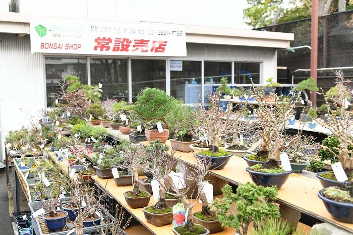 最近は上野グリーンクラブで盆栽のワークショップも行っています。上野グリーンクラブは盆栽協同組合の施設なんですが、盆栽や山野草、伝統園芸などを売る常設の売店があります。  私も常設売店に参加して盆栽を売っていて、店番をする日とは別に、月に2回クラブで教室を開催しています。教室はお客様が持っている盆栽の手入れを一緒に行い、季節の手入れをお教えする教室です。盆栽の育て方がわかれば安心して売店で盆栽を買えますし、自分の欲しいと思う盆栽の手入れができるのが良い点です。