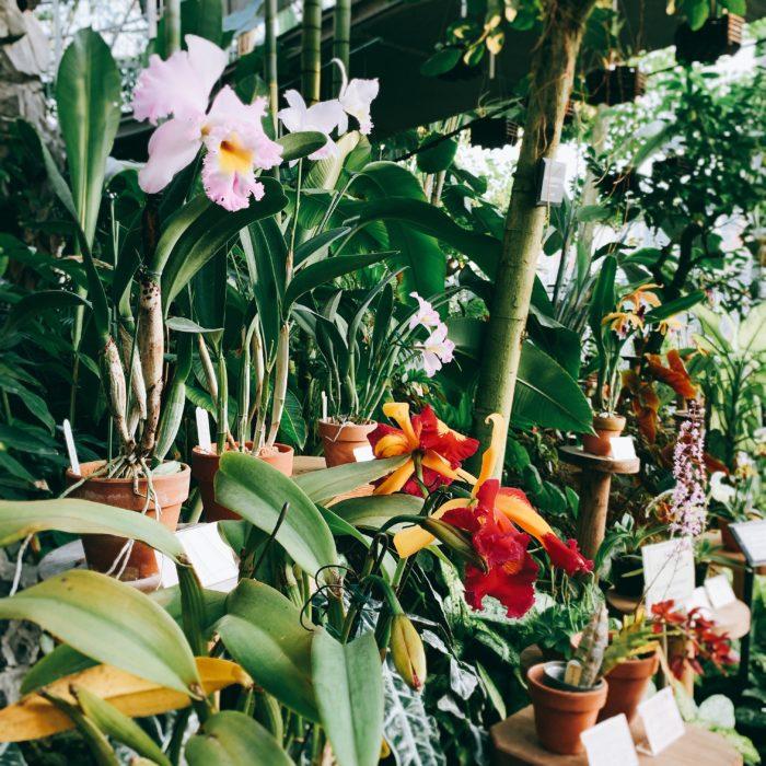 こちらも昨年11月の新宿御苑でのラン展の様子。目に鮮やかな花の色がほかの植物となじんで、いい雰囲気です。 国内ではそのほかにも福岡市植物園、高知の牧野植物園、熱帯ドリームセンターなど、植物の中で花を楽しめるラン展がいくつも開催されています。  今回の世界らん展2019では、そうしたグリーン豊かな空間で、よりいっそうランの魅力を感じられるようになっています。広い範囲が写ってしまうスマホだと、つい画面の隅にいらないものが写っていることがありますが、今回はそんな心配はしなくても大丈夫そうですね。大賞受賞花をはじめとして、いくつかの入賞花をご紹介しましたが、会場にはまだまだ魅力的なランがたくさん!是非会場を訪れて、たくさんの花との出会いを楽しんで下さいね。