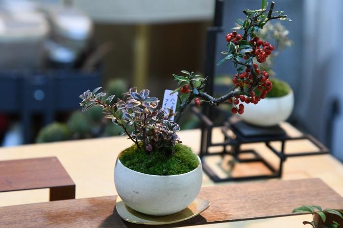 気品のある盆栽の数々。「品のいい品物を提供したい」という想いからお店の名前を「品品」としたそう。