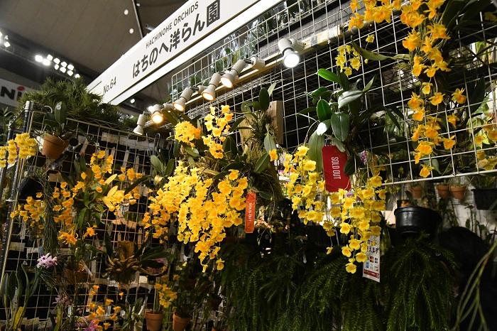 店先には色鮮やかなデンドロビウムの開花株が並びますが、じっくり見ていくと、変わったものが見つかるお店。
