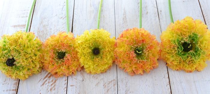 今シーズンもたくさんの素敵なラナンキュラスが出回り中です。  ぜひ花屋さんに立ち寄って、春の花の素敵な色合いや香りを見に行ってみてください!