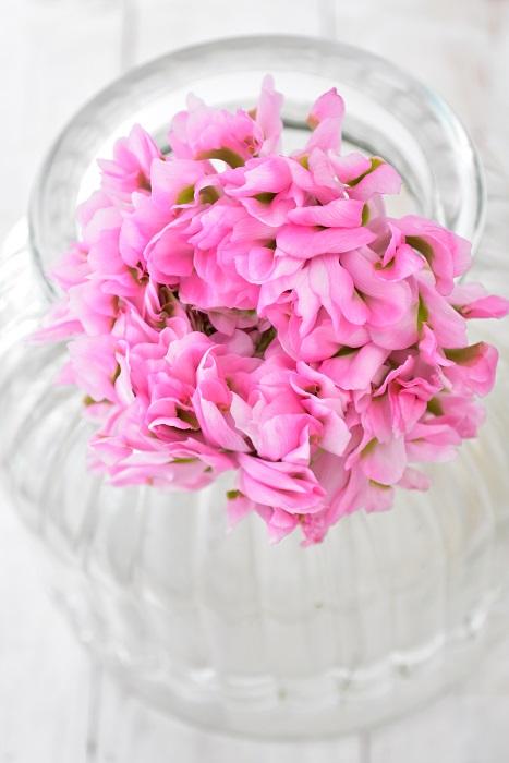 ラナンキュラス・ハーマイオニー  ポンポン咲きはフリルのような花びらが幾重にも重なり、復色の一枚一枚の花びらが絶妙な色合いのラナンキュラスです。一輪、一輪の個体差もあって、同じ品種でも趣の違うものもあります。  ポンポンシリーズのラナンキュラスは、2011年にイタリアで開発されたラナンキュラス。当初の品種名は、ハリーポッターの登場人物の名前が付けられています。新品種がどんどん出るので、すべてかはわかりませんが、ハリーポッターがお好きな方なら「なるほど!」と思う名前もあるかもしれません。そんな角度で花屋さんでポンポンシリーズのラナンキュラスを眺めるのも面白いですね。