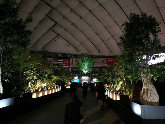 シンボルロードは、展示されている蘭が一つづつライトアップされ、シンボルツリーは七色の照明で幻想的な様子を見せていました。これはグリーンに照らされたシンボルツリー。