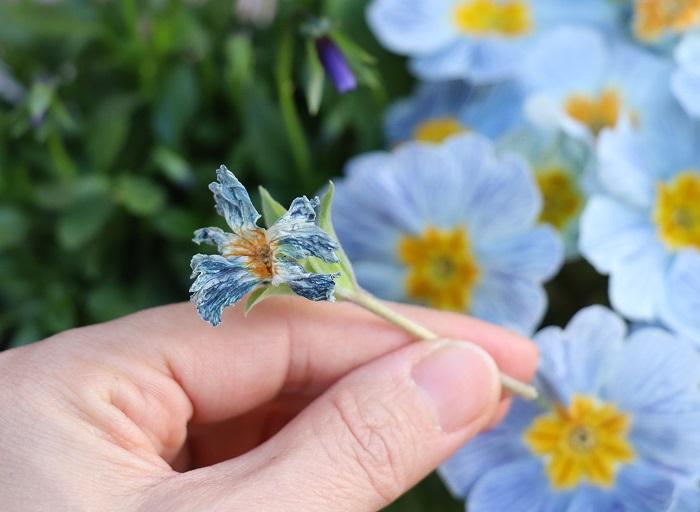 終わってしまった花を取ることで、次の花を次々に咲かせることができます。