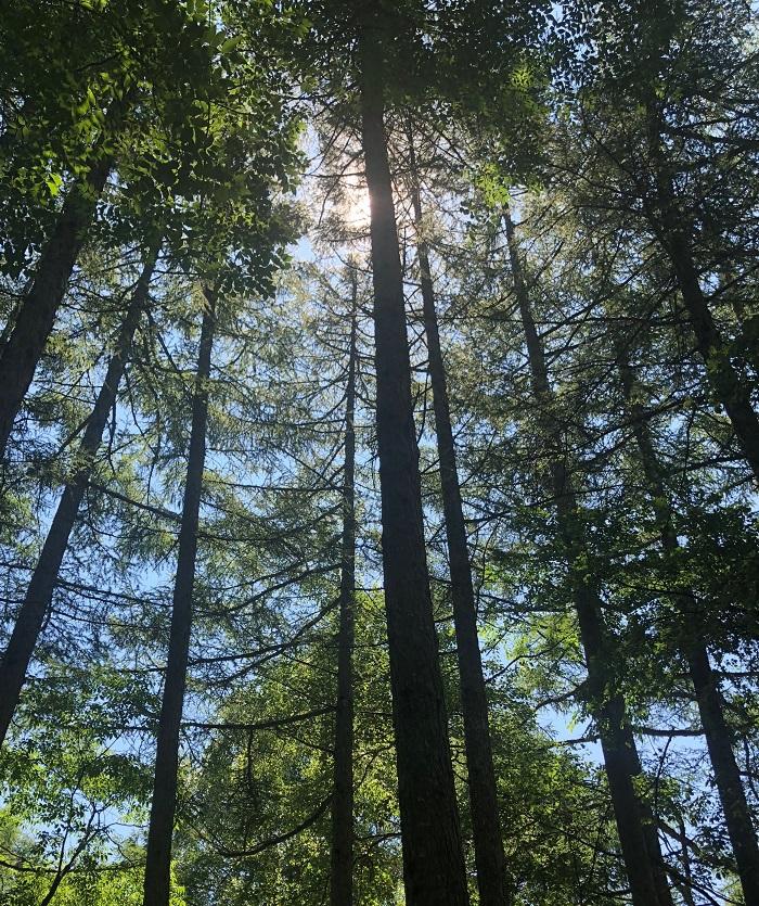 樹木のかおりです。幹の香りで、サンダルウッドやパイン(松)、ヒノキやローズウッドなどがあります。