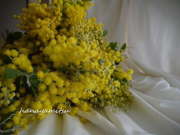 学名:Acacia baileyana(ギンヨウアカシア)、Acacia dealbata(フサアカシア) 科名:マメ科 分類:常緑高木高木 ミモザは桜より少し早くから咲き始める春のお花です。明るい黄色のふわふわとした花を枝いっぱいにたわわに咲かせます。太陽を浴びて咲き誇るミモザの花は見ている者の心を明るくしてくれます。  ミモザの花には強くはない芳香があります。甘ったるさはないのですが、何だか懐かしい気持ちになるような優しい香りです。  ミモザが使われている香水 CHAMPS-ELYSEES/GUERLAIN(シャンゼリゼ/ゲラン) GAGGIA/SANTA MARIA NOVELLA(ミモザ/サンタ・マリア・ノヴェッラ)