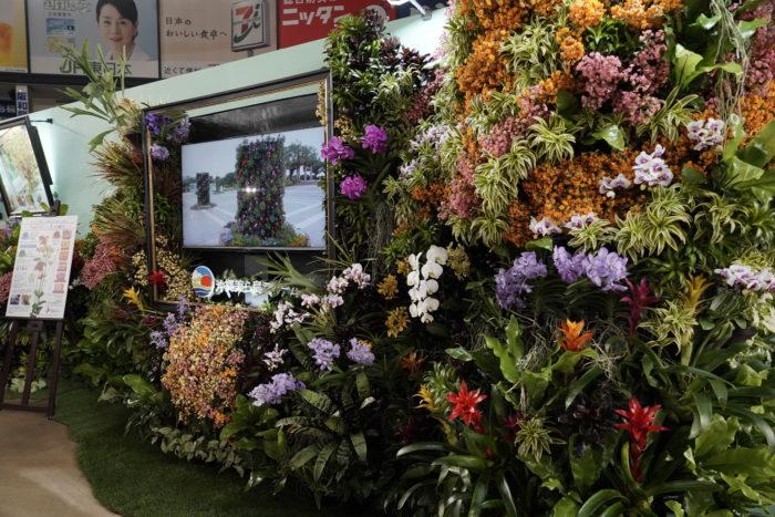 植物と暮らしを豊かに。今回で29回目を迎えた「世界らん展2019」が東京ドームではじまりました。見どころがいっぱいの会場に入ると、華々しく溢れんばかりの蘭がオーキッド・ゲートに彩られお迎えしてくれます。  会場は19のテーマに分けられ、目に鮮やかな蘭や個性的な蘭、特別展示はそれぞれの世界観に引き込まれる魅力とアイデア満点なすばらしい展示に目移りしてしまいます。どこも見逃したくない展示ばかりです。  今回のリニューアルから初めてのナイトショーとライトアップは昼間とは違い、ゆったりとした幻想的な世界で蘭を鑑賞することができます。夜のお散歩のように素敵な時間を過ごせそうです。  蘭を通して植物と暮らしが豊かになる、センス溢れる展示内容は見ているだけでも、ご自宅でも取り入れたくなるアイデアがいっぱいです。今回はLOVEGREEN編集部で遊びに行ってきました。